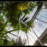 Temperate Palms Glasshouse, Royal Botanic Gardens
