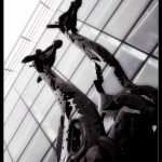 Giraffes, Omni Centre